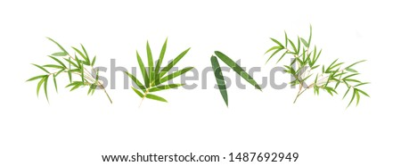 Bamboo leaf isolated on white background, Bamboo leaf texture as background or wallpaper, Chinese bamboo leaf, Collection or set of green bamboo leaves #1487692949