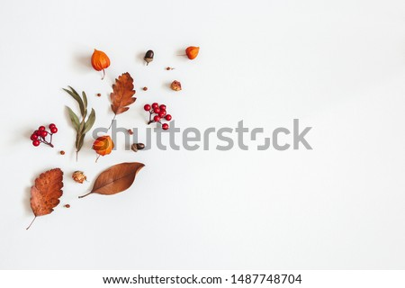 Autumn composition. Physalis flowers, eucalyptus leaves, rowan berries on white background. Autumn, fall, thanksgiving day concept. Flat lay, top view, copy space #1487748704