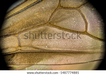 10 x. insect wing pic