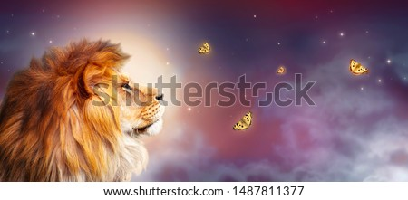 African lion and night savannah in Africa. Moonlight landscape with flying butterflies, king of animals. Proud dreaming fantasy lion in savanna looking on stars. Majestic dramatic starry sky banner. #1487811377