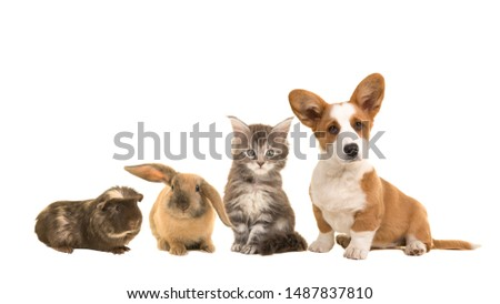 Group of different pets, a puppy, kitten, rabbit and a guinea pig #1487837810