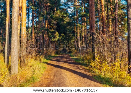 dirt road in the autumn forest on a sunny day #1487916137