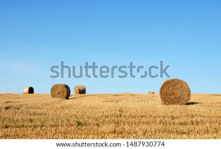 Straw bales in a field in Sussex, England, UK. The golden round bales contrast with the blue sky. Straw bales are a common sight on farms at harvest time. Bales of straw in the English countryside. #1487930774