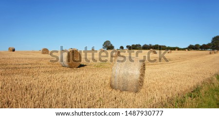 Straw bales in a field in Sussex, England, UK. The golden round bales contrast with the blue sky. Straw bales are a common sight on farms at harvest time. Bales of straw in the English countryside. #1487930777