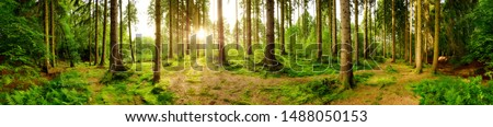 Beautiful forest panorama with bright sun shining through the trees #1488050153