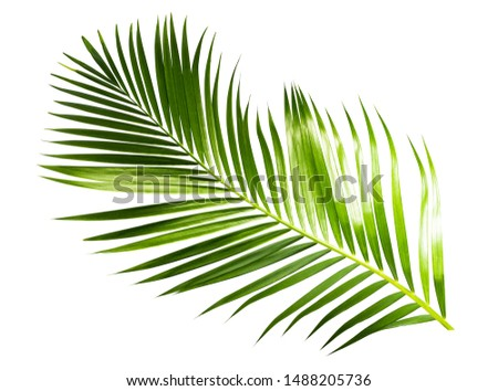 green palm coconut leaves on white background isolate with clipping path. #1488205736