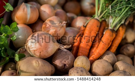 Carrots, potatoes and onions - a set of vegetables from the autumn harvest #1488414248