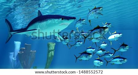 Mako Shark after Yellowfin Tuna 3D illustration - A carnivorous Shortfin Mako shark pursues a school of Yellowfin Tuna in the Pacific Ocean.