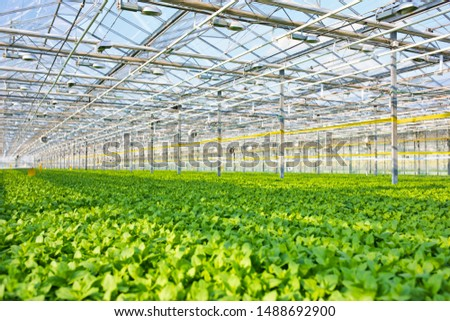 Full length view of  Herbs growing in greenhouse #1488692900