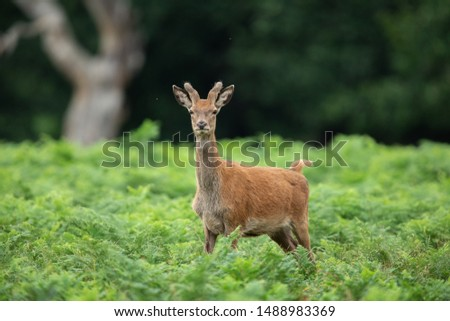 Red deer in the forest #1488983369