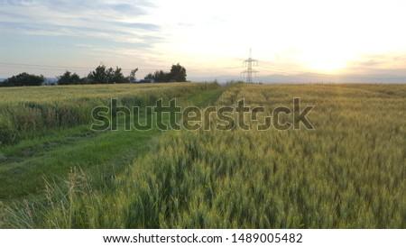 green grain field sunset sunrise clouds Royalty-Free Stock Photo #1489005482
