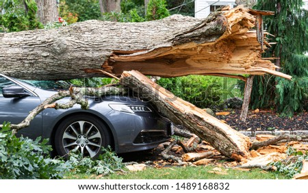 A car crushed with a tree on top of it after the tree split and fell during a wind storm on Long Island New York. Royalty-Free Stock Photo #1489168832