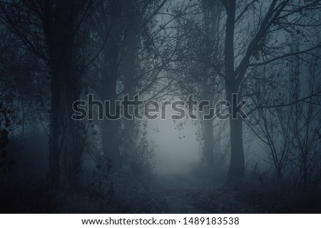 Mysterious pathway. Footpath in the dark, foggy, autumnal, mysterious forest. #1489183538