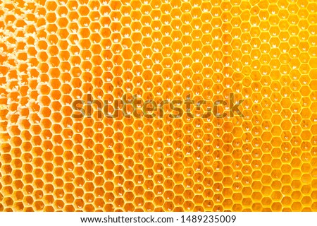 Honeycombs with sweet golden honey on whole background, close up Royalty-Free Stock Photo #1489235009