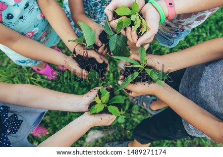children plant plants together in their hands. Selective focus. nature. #1489271174