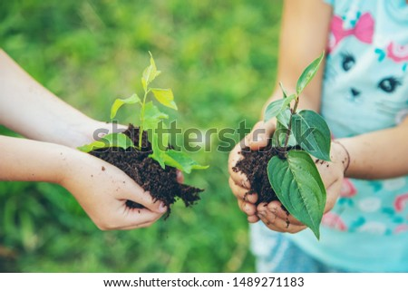 children plant plants together in their hands. Selective focus. nature. #1489271183