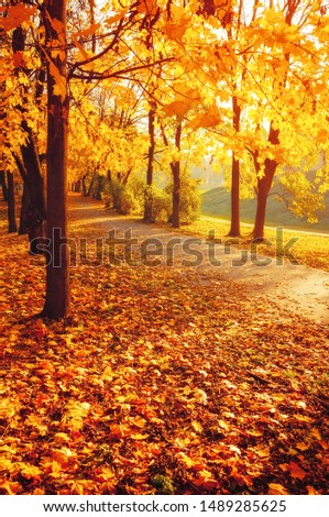Fall trees in sunny autumn park lit by sunshine - sunny autumn landscape in bright sunlight. Fall park sunset scene #1489285625