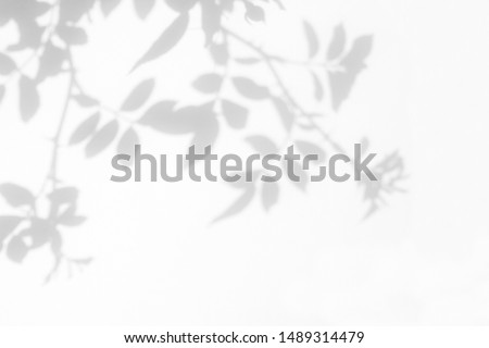 Overlay effect for photo. Gray shadow of the wild roses leaves on a white wall. Abstract neutral nature concept blurred background. Space for text. #1489314479