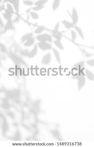 Overlay effect for photo. Gray shadow of the wild roses leaves on a white wall. Abstract neutral nature concept blurred background. Space for text. #1489316738