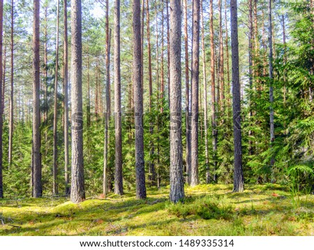 pine forest as background frame #1489335314