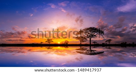 Panorama silhouette tree in africa with sunset.Tree silhouetted against a setting sun reflection on water.Typical african sunset with acacia trees in Masai Mara, Kenya. Royalty-Free Stock Photo #1489417937