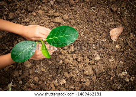 Planting trees, planting hands, planting trees, planting soil, saving earth and reducing global warming. #1489462181