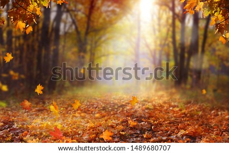 Beautiful autumn landscape with yellow trees and sun. Colorful foliage in the park. Falling  leaves natural background .Autumn season concept #1489680707