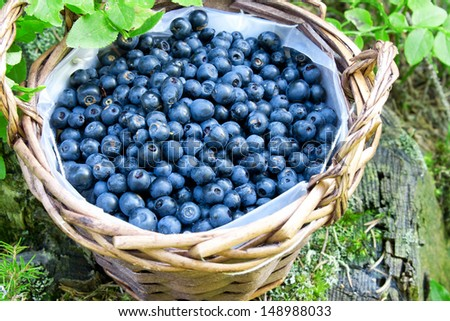 basket with fresh blueberries from the forest,fresh ripe berries and dessert ingredient #148988033