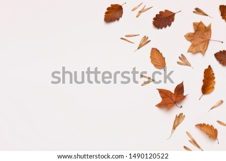 Creative autumn frame of brown dead leaves on white background, copy space for text or advertisement #1490120522
