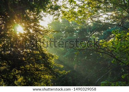 Sunlight and sunlight rays beautifully fall through the leaves of trees on a foggy summer morning #1490329058