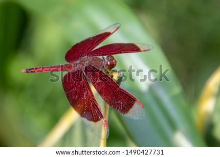 Red dragonfly on a leaf #1490427731