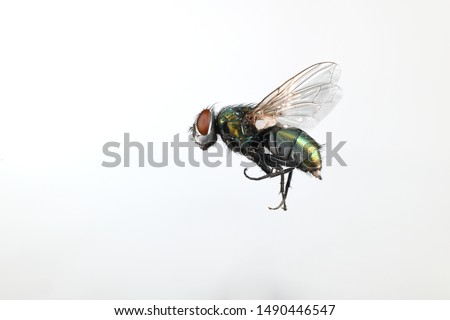 Close-up image of a fly in flight Royalty-Free Stock Photo #1490446547