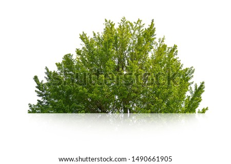 green bush isolated on white background. #1490661905