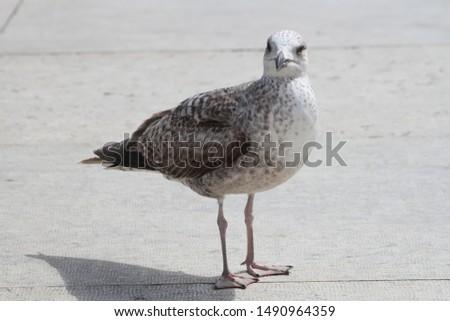 Curious bird in the Roman Palatin #1490964359