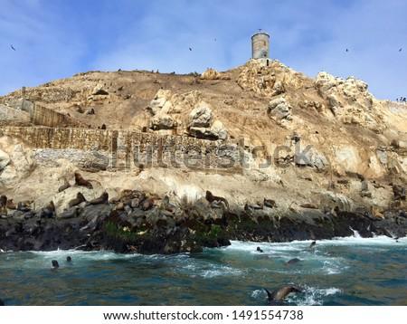 Sea lions on the Palomino Islands off the coast of Lima #1491554738