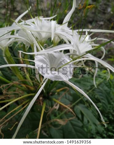 Beautiful white flower during rainy season in india #1491639356
