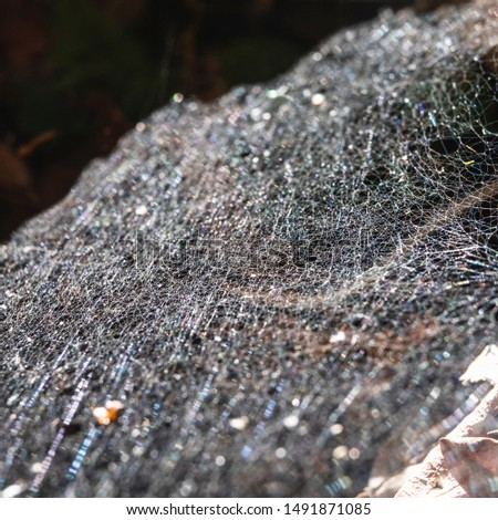 A spider web in a forest, Italy #1491871085