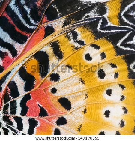Macro close up of an Monarch Butterfly Wing  Royalty-Free Stock Photo #149190365