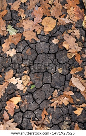 Dry yellow and orange leaves on the cracked ground. Grungy arid land texture. Drought land. Grey cracked ground surface. Autumn leaves on the ground. Dry desert ground. Top view and close-up picture. #1491929525