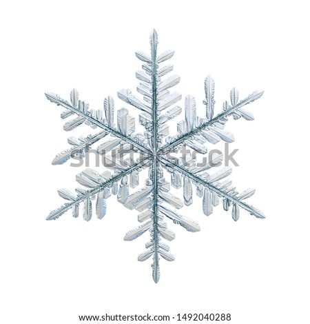 Snowflake isolated on white background. Macro photo of real snow crystal: elegant stellar dendrite with fine hexagonal symmetry, glossy relief surface, complex details and six thin, fragile arms. #1492040288