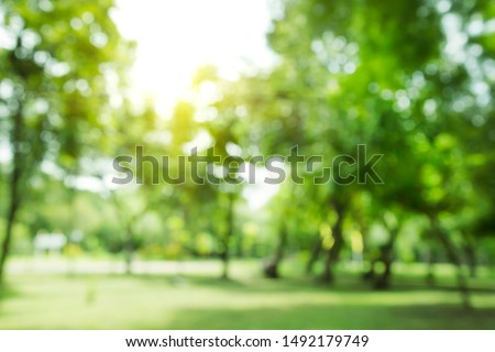 blurred photo Lawn and trees green background with Beautiful lawn The shadows of the shrub are grassy smooth clean.