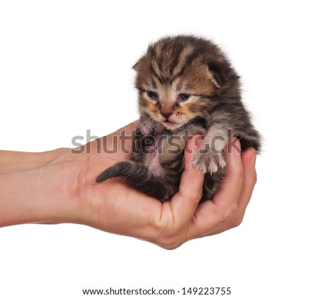 Little kitten in a woman hand isolated on white background #149223755