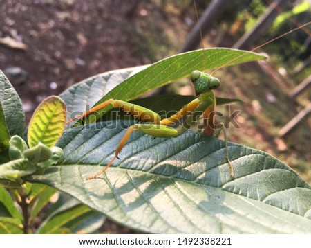 green grasshopper on a leaf #1492338221
