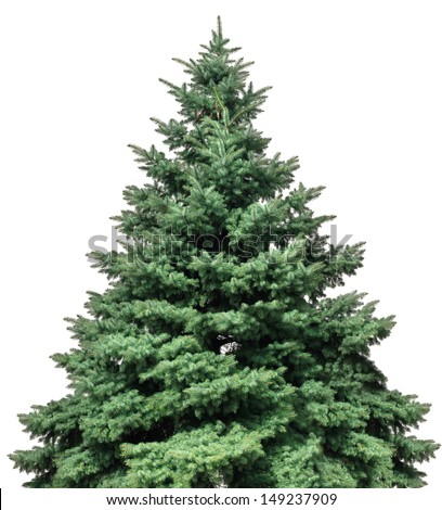 Isolated image of pine on a white background #149237909