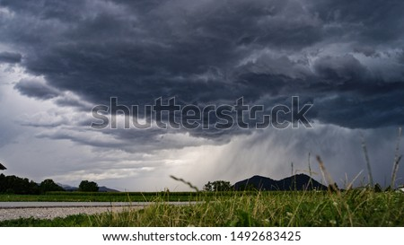 CLOSE UP: Idyllic agricultural farmland with lush maize fields in gorgeous green valley surrounded by forested mountains on stormy summer day. Grass blades swaying in the wind on bad weather evening Royalty-Free Stock Photo #1492683425