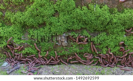 Rare image of lot of caterrpillers. #1492692599