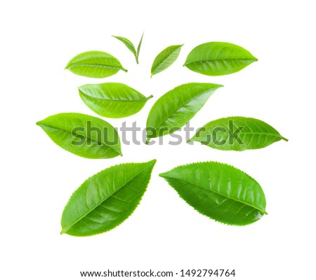 green tea leaves isolated on white background  #1492794764