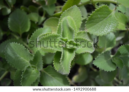 CLOSE-UP PICTURE OF GREEN LEAVES #1492900688