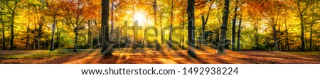 Autumn forest in sunlight with beautiful autumn foliage as panorama background Royalty-Free Stock Photo #1492938224