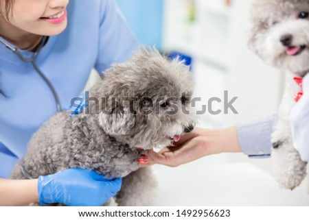 close up of dogs in the veterinary hospital #1492956623